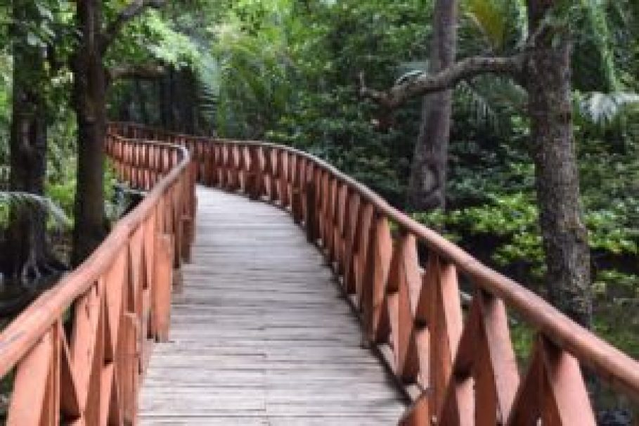 Board-walk over the mangroves, Rangat-min