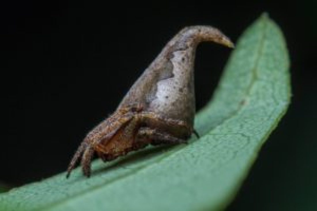 This new spider looks like the sorting hat from Harry Potter_SAEVUS