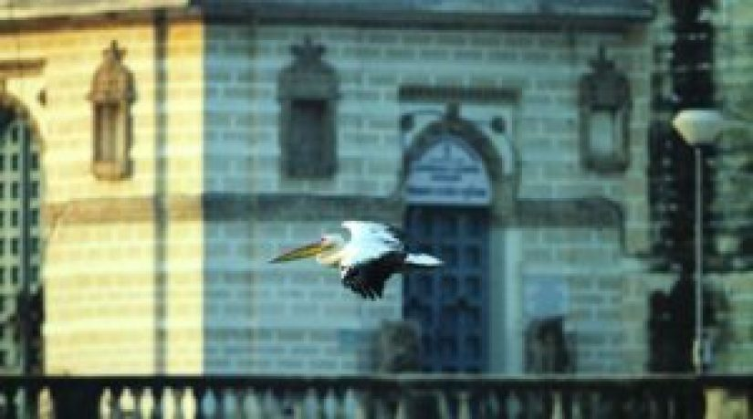 A pelican flying against the monument_Jamnagar