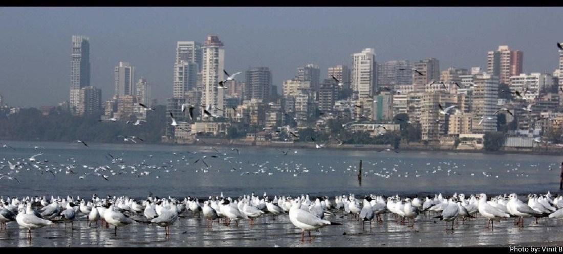 Birds Beckon: Top Places to go Birding in Mumbai