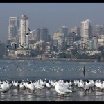 Birds Beckon: Top Places to go Birding in Mumbai