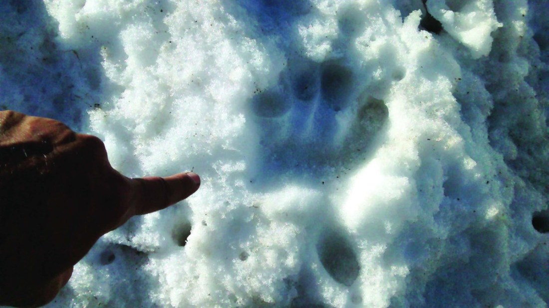 The author's 'aha' moment of discovering a Snow leopard's pugmark