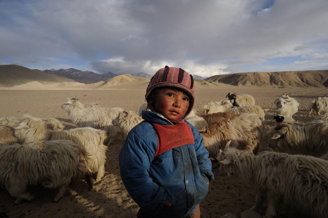 Saevus nomads_1_ Green … once upon a time Conservation Travel  robu Pashmina wool Ladakh himalaya Changpas
