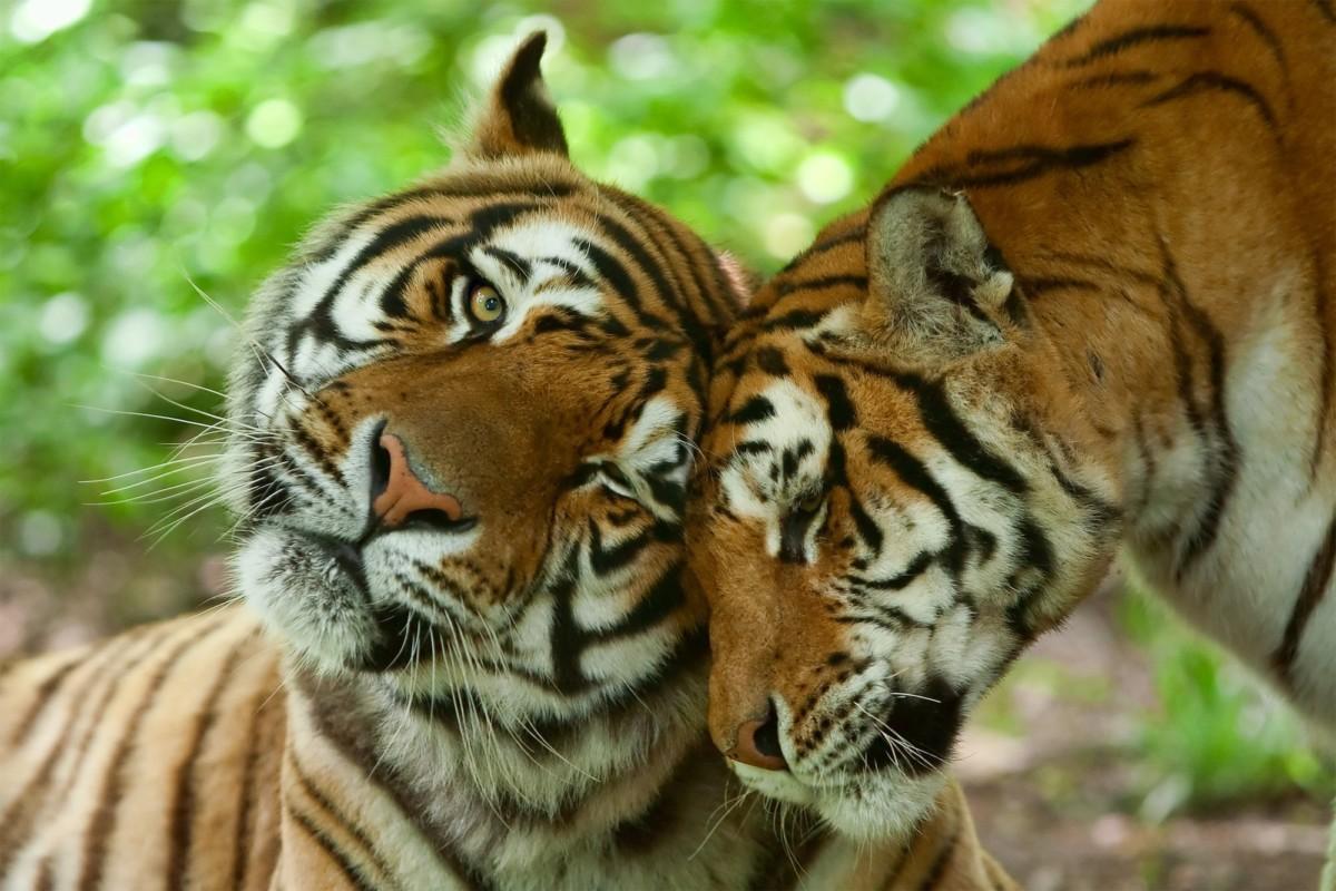 Dating app, Saevus, Zoo animal