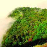 The Shola Sky-lands