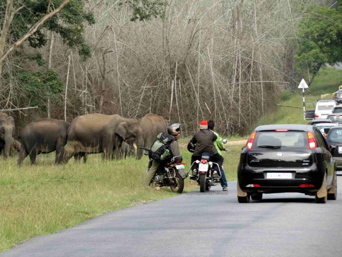 Tourist blocking 'free movement' of elephants