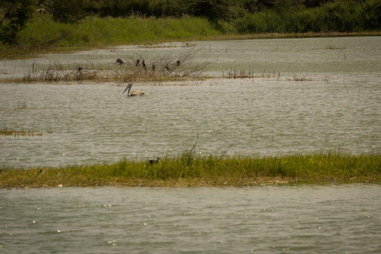 Wetlands of Tamil Nadu soon to have protected status