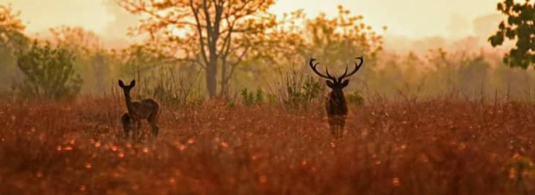Photo from Chattin Wildlife Sanctuary