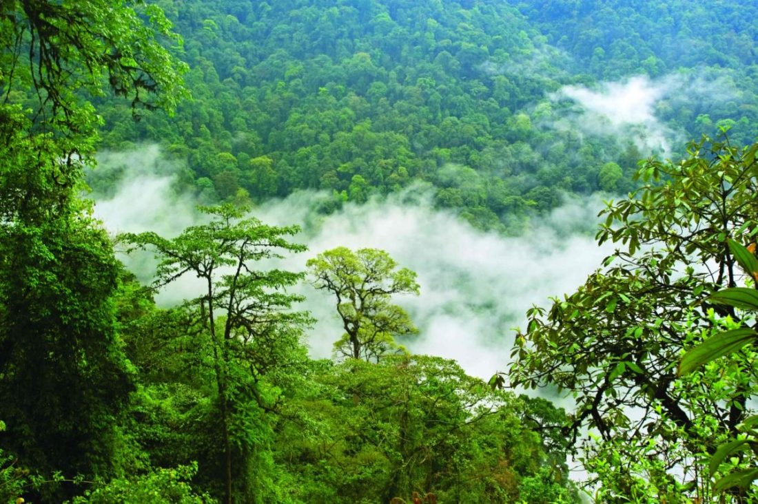 Canopy of the Eaglenest Wildlife Sanctuary, Arunachal Pradesh— one of India's richest rainforests.