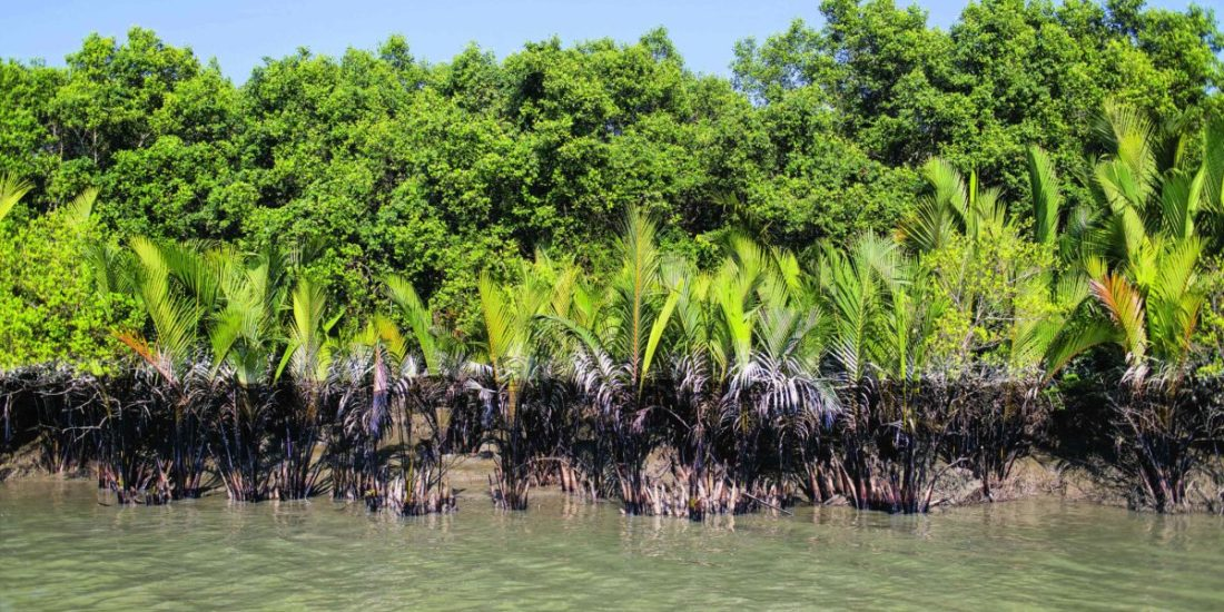 Taken a week after the oil spill incident in Sunderbans, the black line of shame is printed on the trees on the bank of the Salagang. Experts fear that these trees might die if the thick oil stays on them for an extended period.