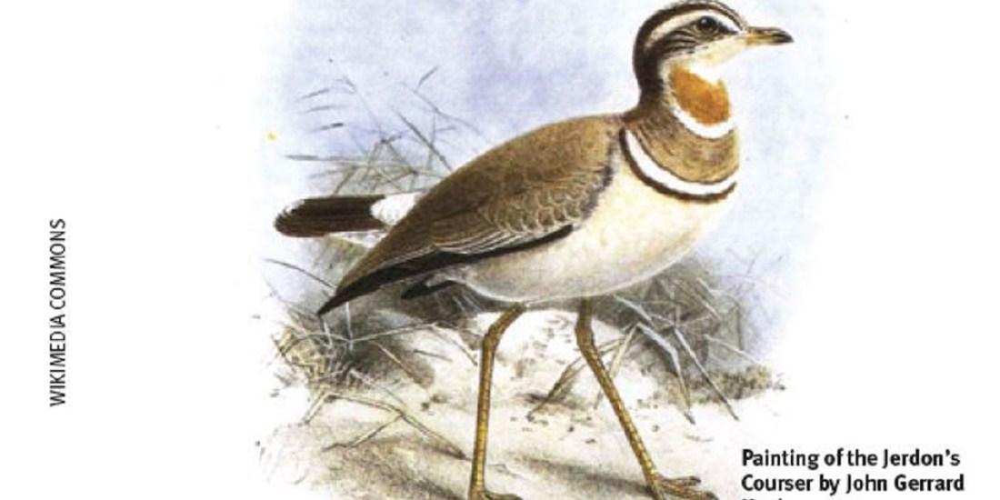 India's two rarest birds