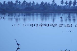 The story of a Glory Lost – Kolleru Lake