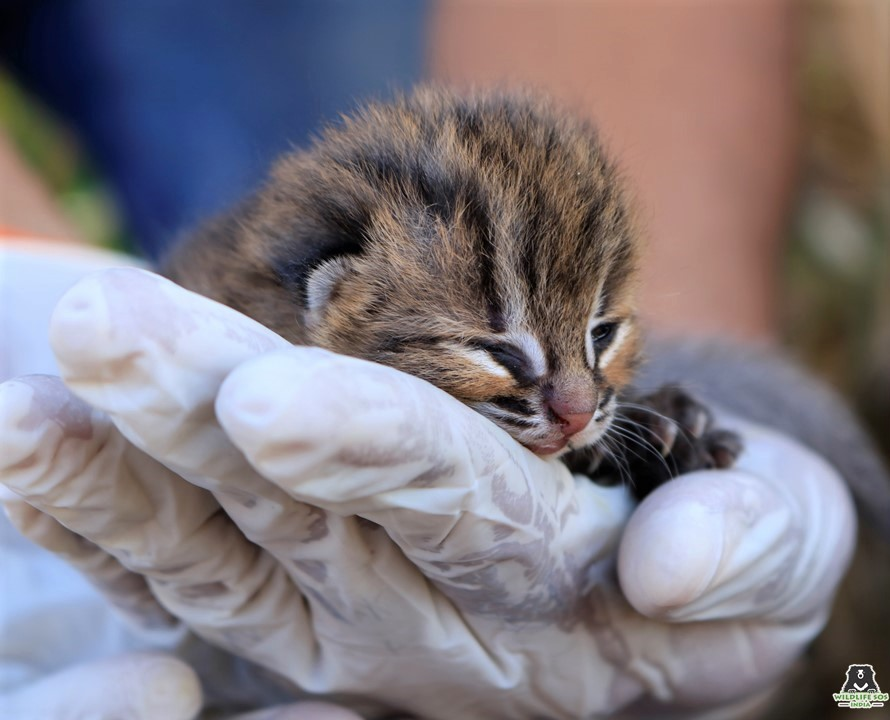 A happy ending for a tiny feline