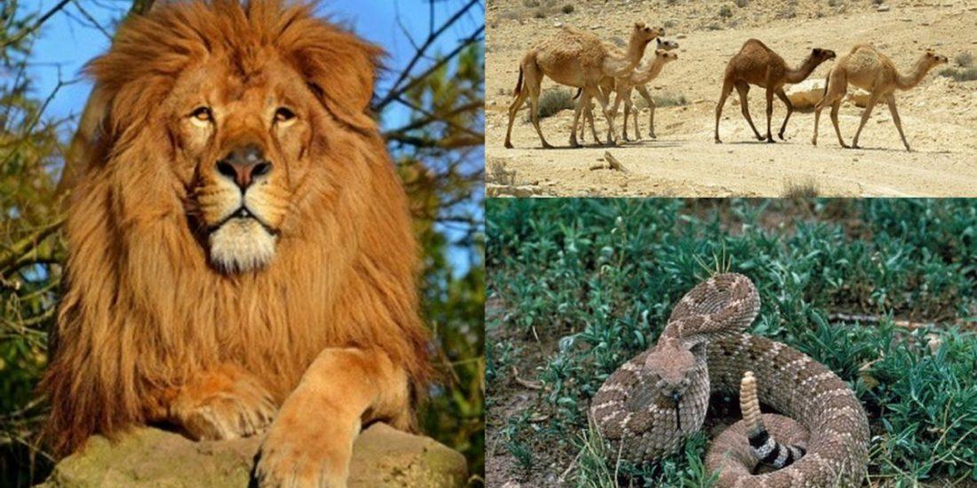 Myths and wildlife