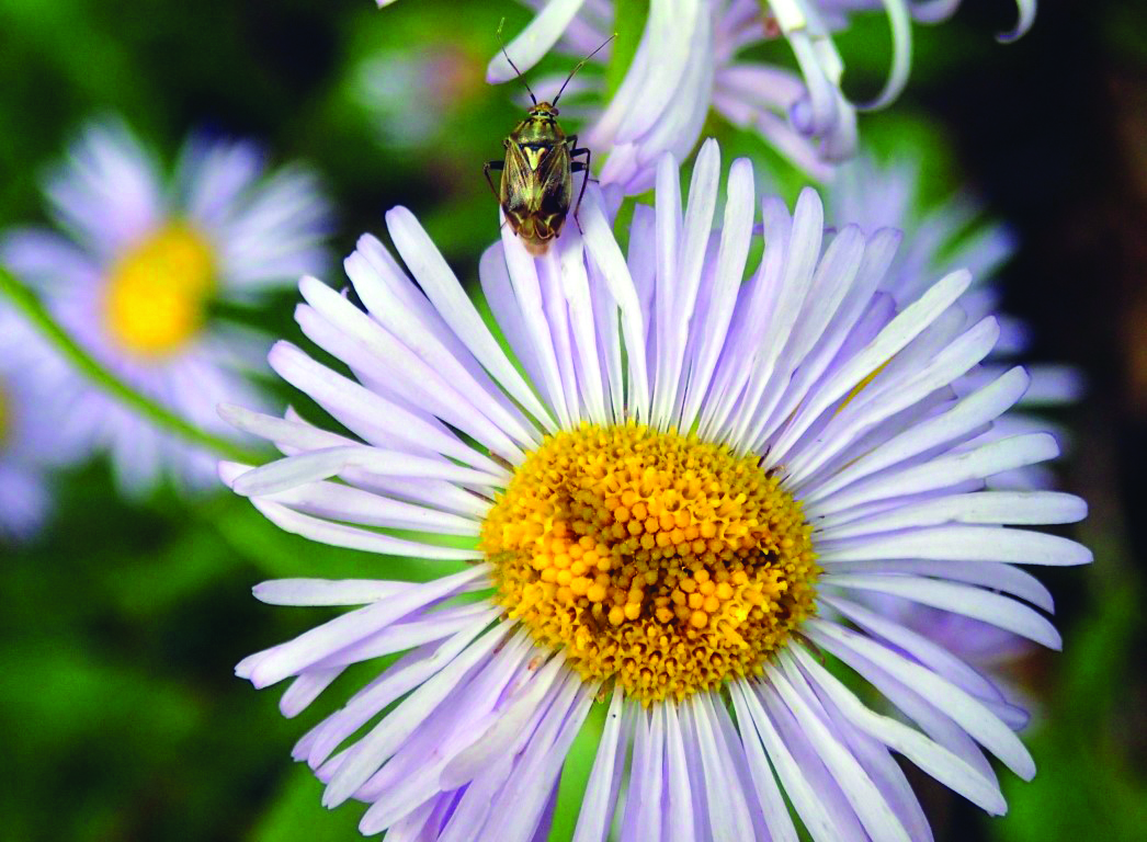 Major contributors to the eco-systems: Insects