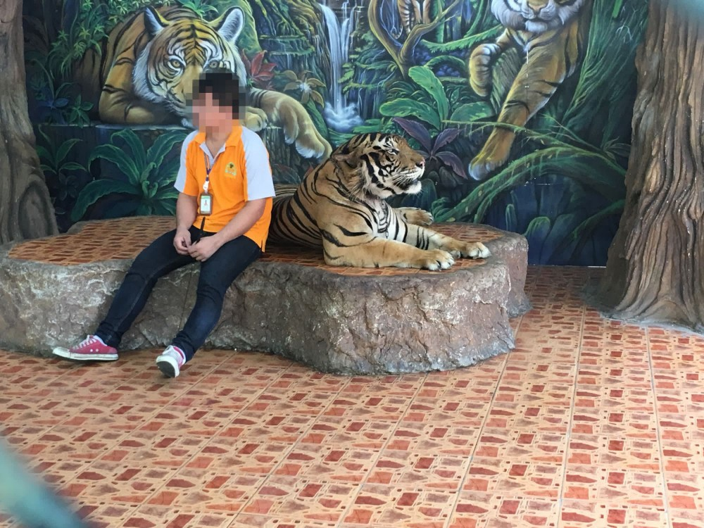 Troubled tigers