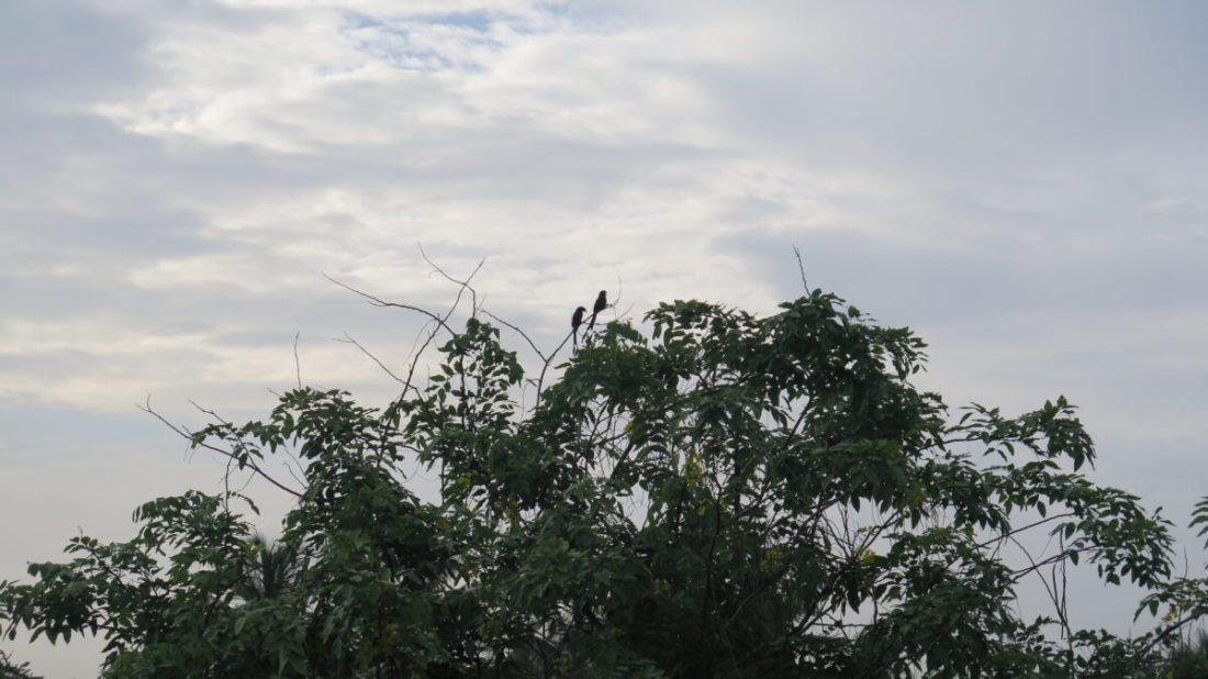 Balcony Birding