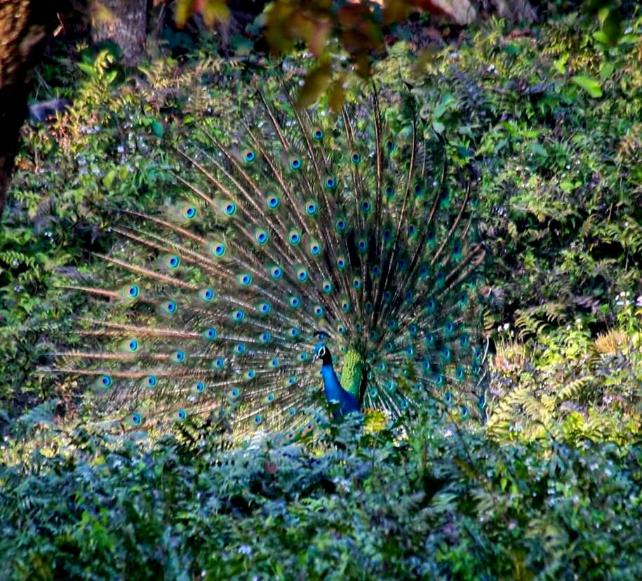 Bewitching Buxa: Its Biodiversity, Threats and Panoramic Spectacle