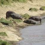 A qualified bush guide in Kenya will be able to give information on wildlife behavior