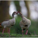 https://thewildernessalternative.com/2013/12/27/birds-of-kenya/kenya-birds-20/