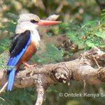 http://www.ontdekkenya.com/E/reviews/ontdek-kenya-tour-report.html