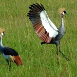 http://www.maratimbo.com/special-interests/bird-watching?lang=en