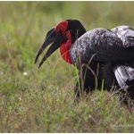 https://thewildernessalternative.com/2013/12/27/birds-of-kenya/kenya-birds-37/