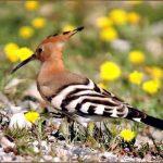 http://www.smiletoafricaadventure.com/bird_watching_kenya_safaris.html