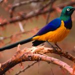http://www.magicalkenya.com/what-to-do/go-on-safari/birding/