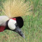 http://www.travelingsaurus.com/2015/10/the-beautiful-birds-yes-birds-of-kenya/