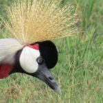 http://www.travelingsaurus.com/2015/10/the-beautiful-birds-yes-birds-of-kenya/