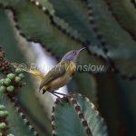 http://www.robertwinslowphoto.com/Animals/Birds/Birds-of-East-Africa/i-bQSZsKX