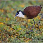 https://thewildernessalternative.com/2013/12/27/birds-of-kenya/kenya-birds-36/
