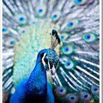 http://blog.karineardault.com/karine_ardault/2011/10/kenyan-birds.html