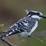 http://www.alltimesafaris.com/saf-specialist-3days-kenya-birding-safari.html