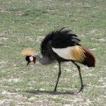 http://www.ventbird.com/birding-tour/kenya-birds-wildlife