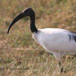 http://www.kenyatravelideas.com/birds-of-kenya-pictures.html