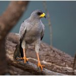 https://thewildernessalternative.com/2013/12/27/birds-of-kenya/kenya-birds-2/