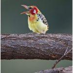 https://thewildernessalternative.com/2013/12/27/birds-of-kenya/kenya-birds-11/