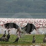 https://www.dreamstime.com/royalty-free-stock-photography-kenya-birds-image13536847