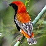 http://www.ewamannssafaris.com/joomla/index.php/kenya-safaris-packages/bird-watching-tours-and-safaris-in-kenya