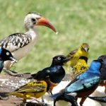 http://genetsafaris.com/bird-watching/