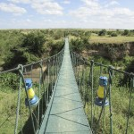 A guided safari can be shared or booked privately