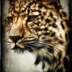 The cheetahs are amongst the most elusive as well as beautiful of African animals