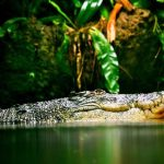 Crocodiles account for a few hundred disappearances and deaths each year throughout Africa