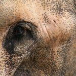 Threat to the eastern African elephant populations is increasing