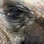 Elephants have complex consciousness