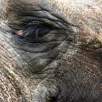 Elephants have complex consciousness