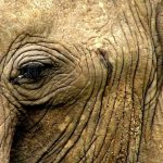 The elephants have complex consciousness