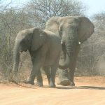 The elephant is capable of strong emotions